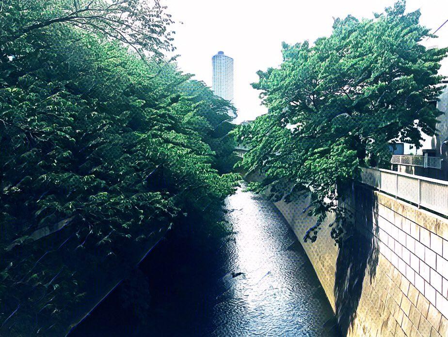 東京都中野区東中野の神田川で、中央線・総武線近くの橋から近所を撮影