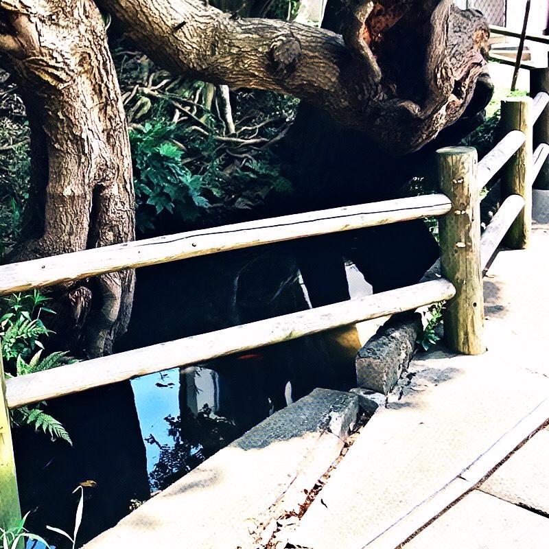 千葉県柏市の風景 4 湧水