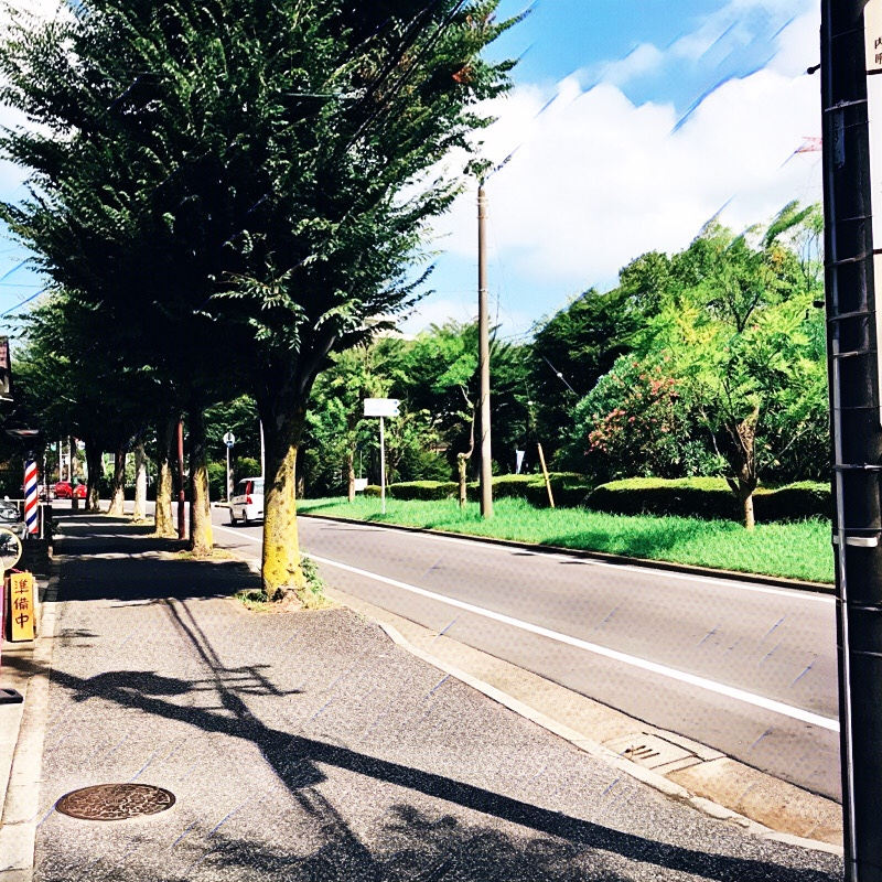 千葉県柏市の風景 18 けやき通り