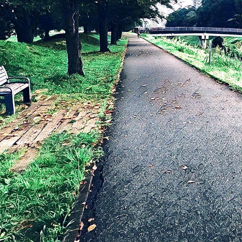 千葉県柏市の風景 9 大堀川脇の遊歩道