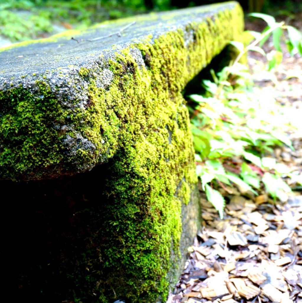 おでかけ 西沢渓谷 (山梨県山梨市) に行ってきた A 12 苔むしたベンチ