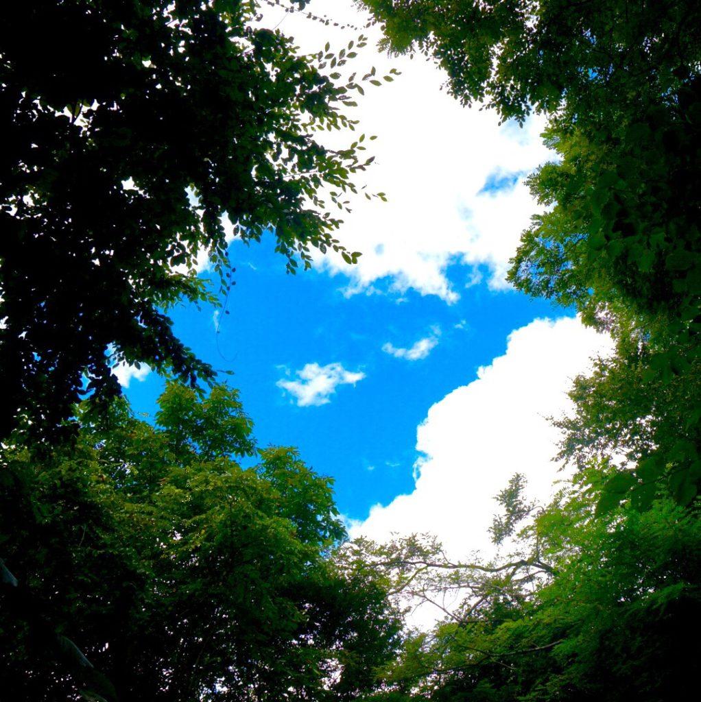 おでかけ 西沢渓谷 (山梨県山梨市) に行ってきた A 3 木陰から空を撮影