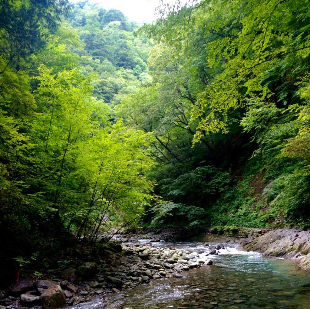 山梨県・西沢渓谷 Japan Nature - D17