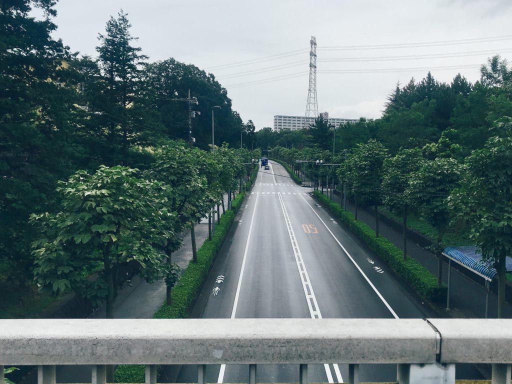 東京都多摩市、多摩ニュータウンのススキ 7