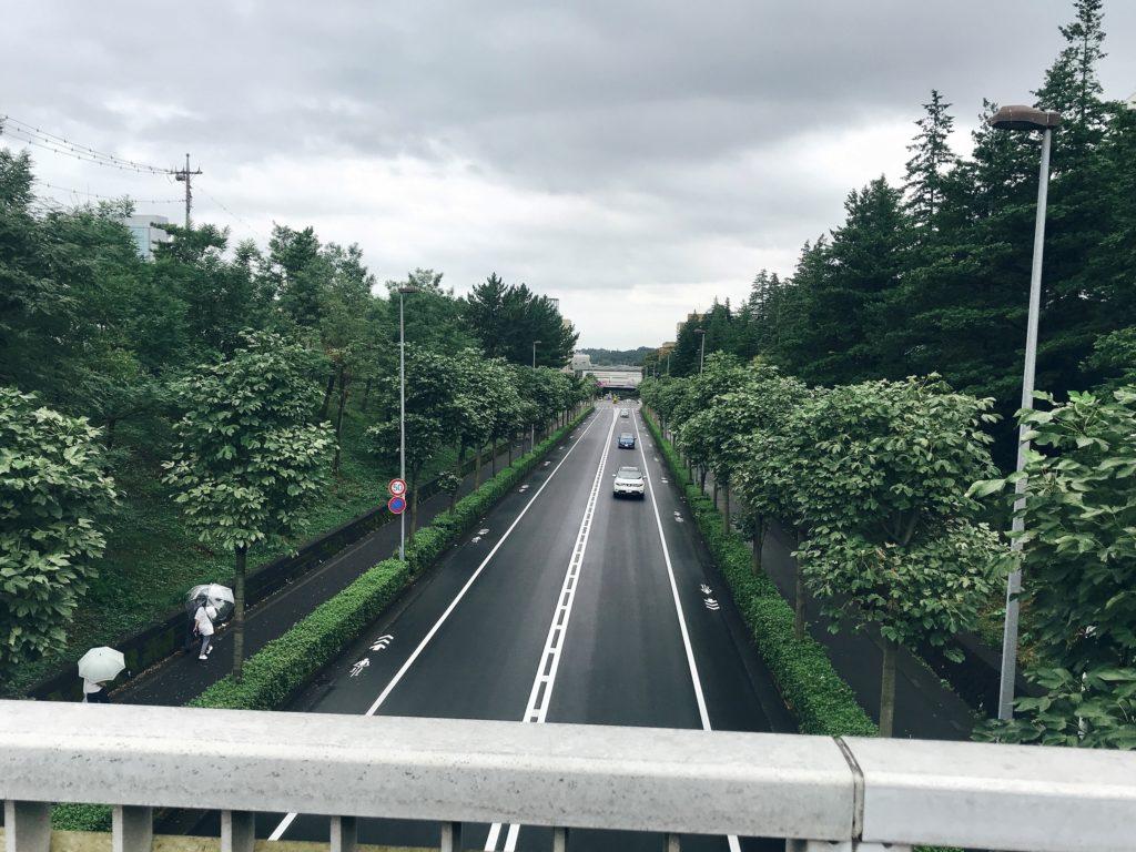 東京都多摩市、多摩ニュータウンのススキ 8