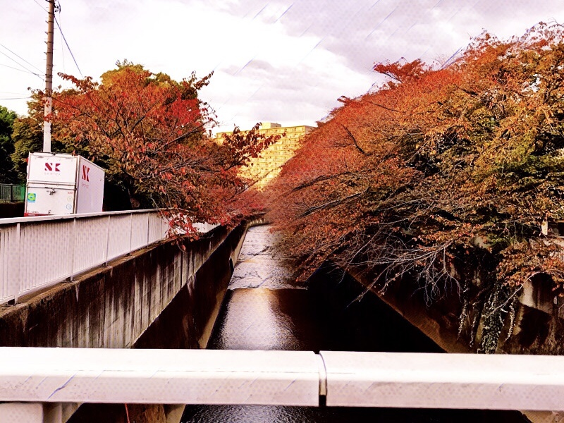 2020年秋、11月上旬の新宿区の紅葉の様子を記録したよ