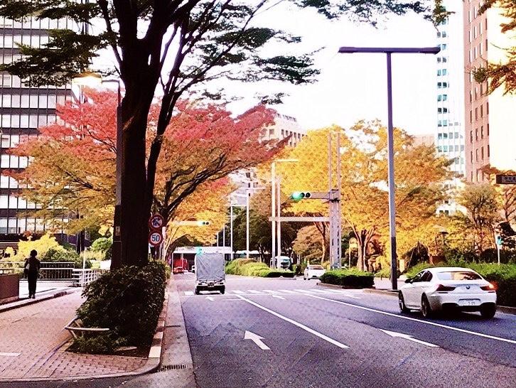 2020年秋、新宿区の紅葉の様子 1